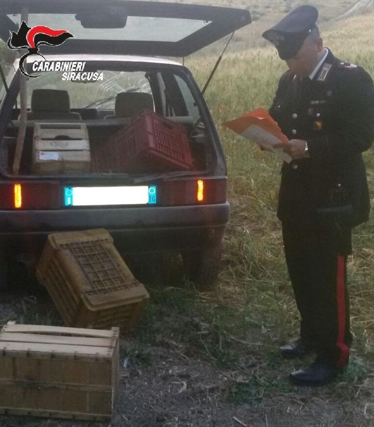 ARRESTATO PER IL FURTO DI 100 KG DI PRODOTTI AGRICOLI